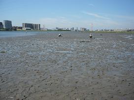 多摩川河口01