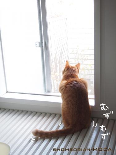 大人しくお外を眺めて~