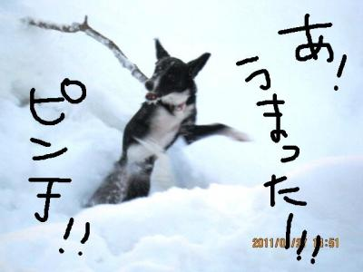 IMG_9730_3.jpg