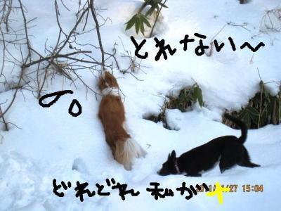 IMG_9744_1.jpg