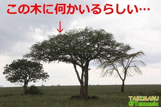 new30-2013121613.jpg