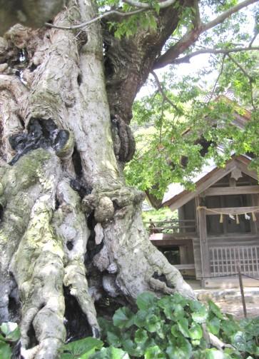 命主 ムクの木