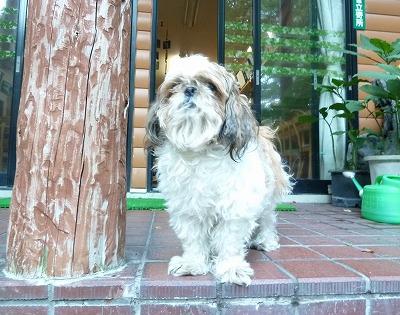 山の家の看板犬さん