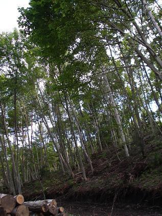 整備された森