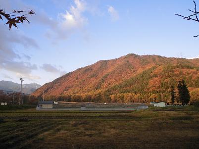 裏山(2013年11月 その1)