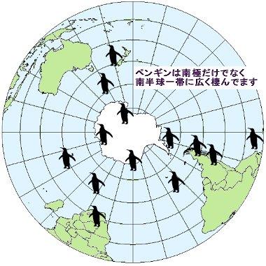 ペンギンは南半球に棲んでます