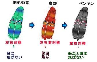 羽毛の役割の変遷