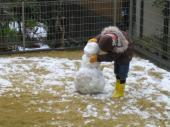 雪遊び2012-2
