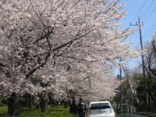 近くの桜の名所