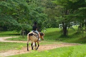 ホースパークの引き馬