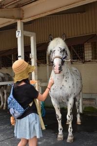 ホースパークの馬