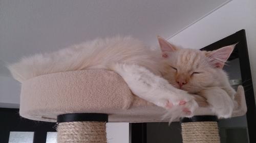 寝ている白玉