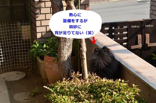 024_201310151405375e6.jpg
