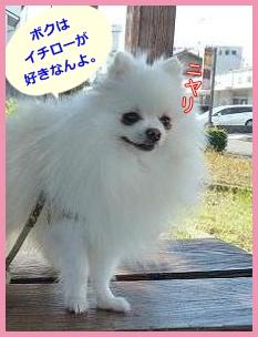 ne_20131126221403b63.jpg