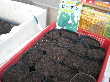 苗作り (1)