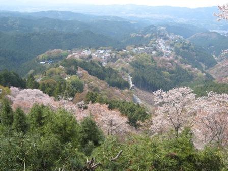 吉野千本桜 (3)