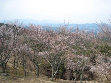 吉野千本桜 (5)
