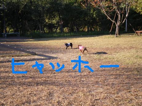 森林公園 雫 雷電 ひゃっほっ
