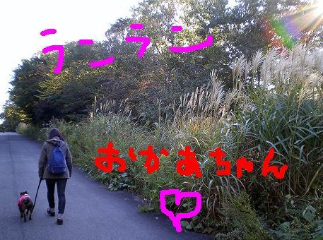 森林公園 雫 雷電 ドッグランへ