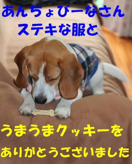 IMG_3414-1.jpg