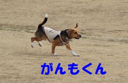IMG_3862-1.jpg