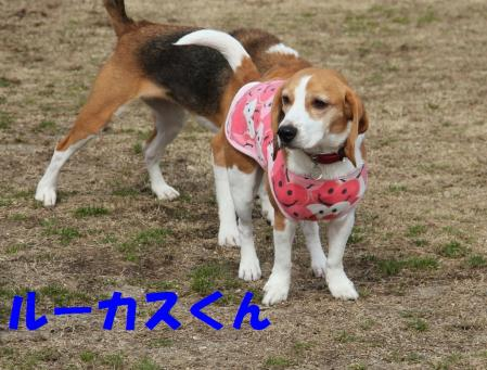 IMG_3874-1.jpg