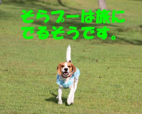 IMG_7341-1.jpg