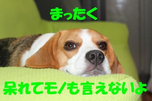 IMG_8542-1.jpg