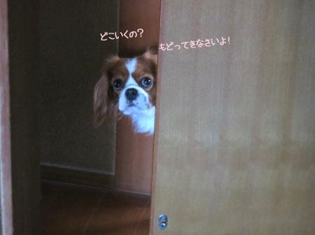 どこ行くの