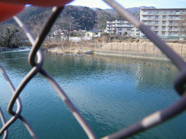20120221桂下見52