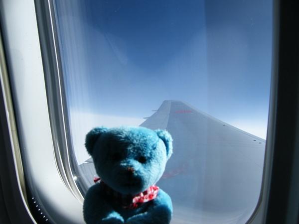 飛行機窓くま