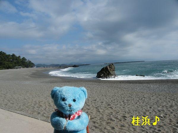 桂浜とくま