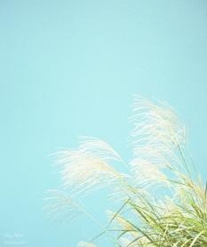 やさしい風のにおい。