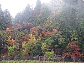 20141102-03生杉 001