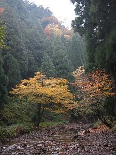 20141102-03生杉 022