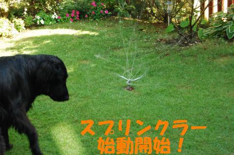 001_convert_20100722221240.jpg