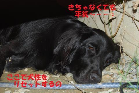 001_convert_20100816184157.jpg