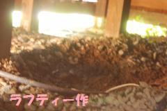 002_convert_20100816190411.jpg