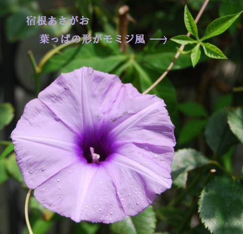 002_convert_20100818210856.jpg