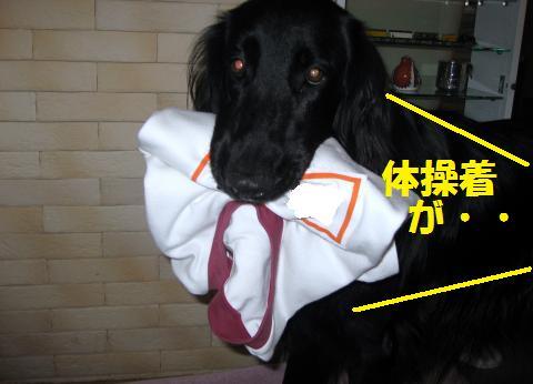 002_convert_20101010200834.jpg