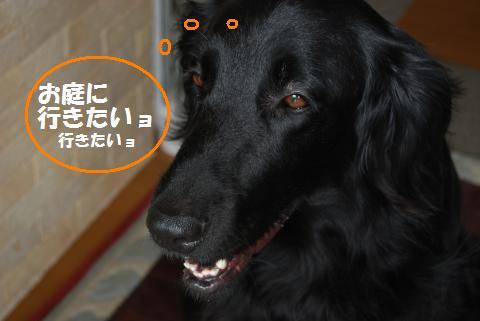 003_convert_20100714132027.jpg