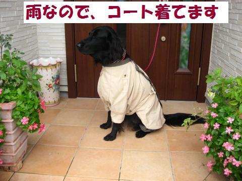 003_convert_20101010202041.jpg