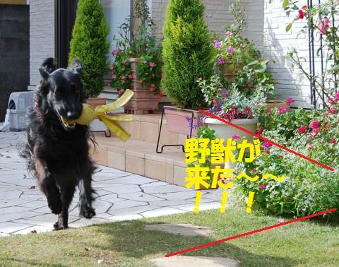 004_convert_20101116175738.jpg