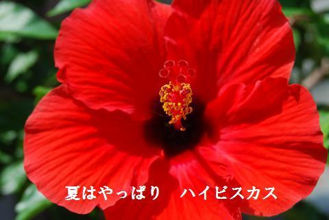 006_convert_20100816191222.jpg