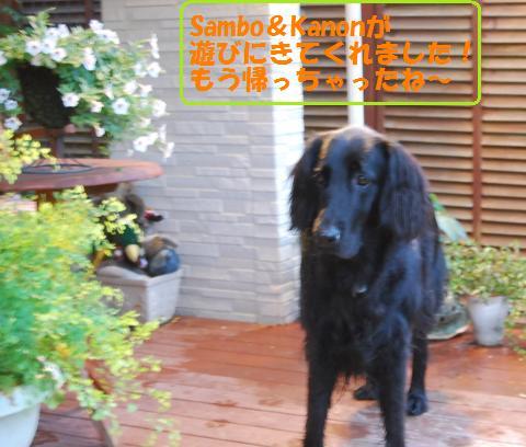 007_convert_20100925124904.jpg