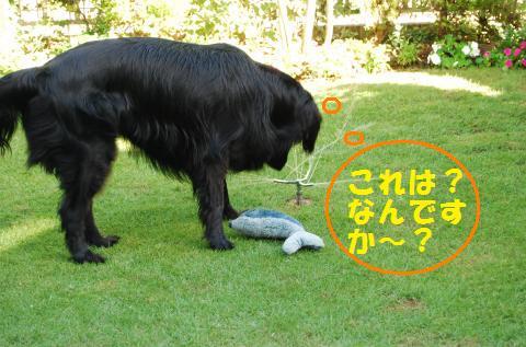 008_convert_20100722221445.jpg