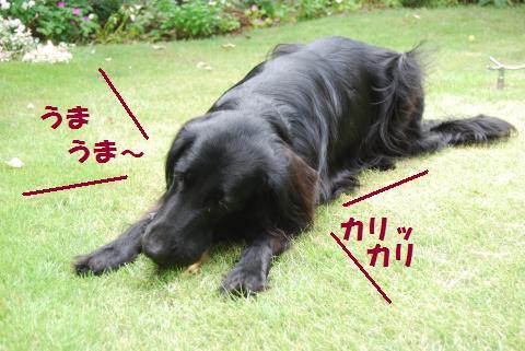 011_convert_20100907152700.jpg