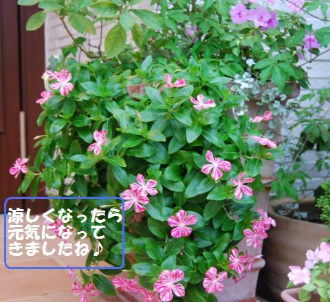 013_convert_20100925131241.jpg