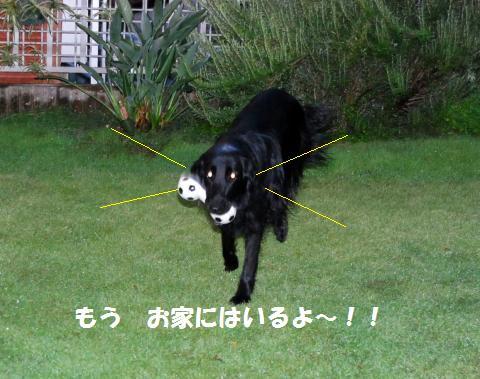 015_convert_20100925131516.jpg