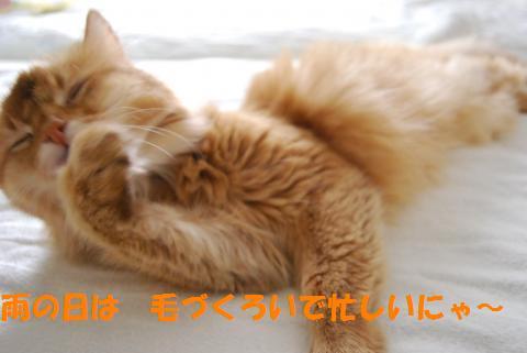 016_convert_20100930130732.jpg